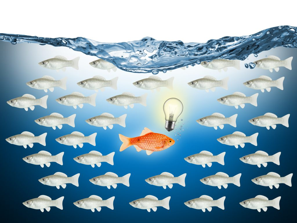 Question piège : où est le créateur de start-up ?
