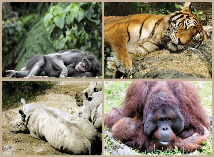 Les ignorants croient que ces animaux font la sieste, alors qu'ils bossent pour des start-up...